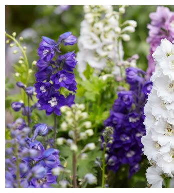 Misez sur ces 14 fleurs qui ne craignent pas l'hiver