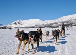 © Traîneau à chiens en Laponie suédoise - Julien Pioppo