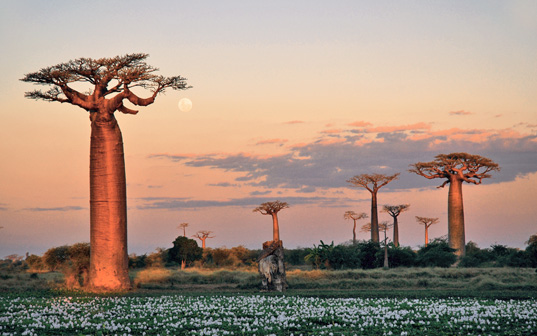 Madagascar © Espace Mada