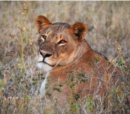 © Sur les routes de Namibie et du Botswana