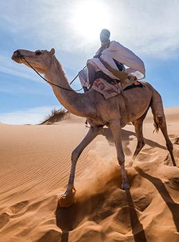 Mauritanie : retour au Sahara ©