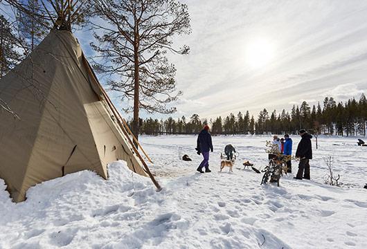 Dans les forêts de Laponie © Alexandre Lamoureux