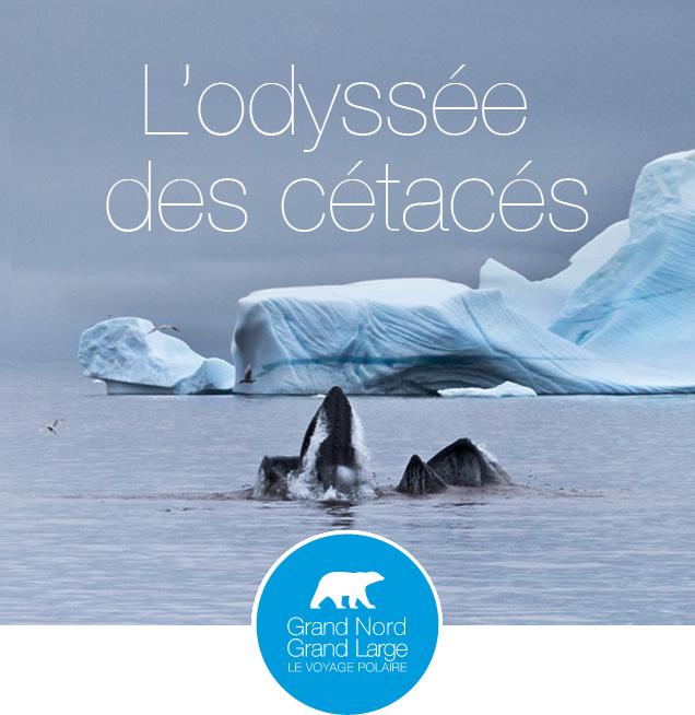 L'odyssée des cétacés © Aurélie Amiot