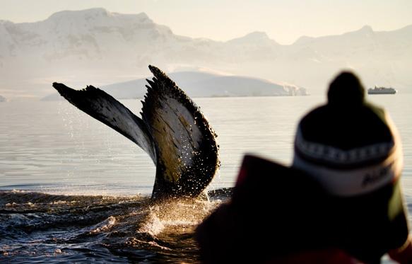 Antarctique et géants des mers © Evelyn Pfeiffer