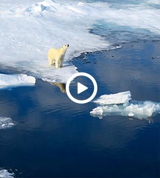 L'ours polaire seigneur du Spitzberg © Aymeric Labiche