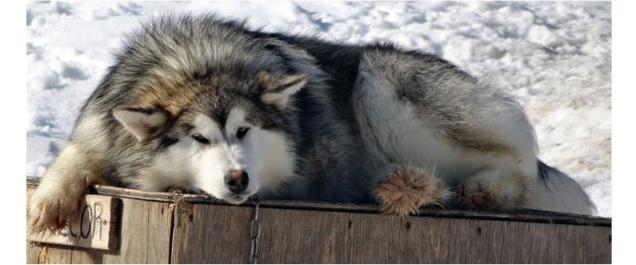 Dans la peau d'un musher et entraînement d'automne © Attraction boréale