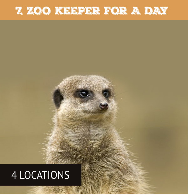 Zoo Keeper for a Day Choice Voucher - Only £259