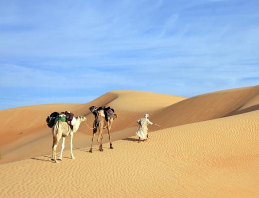Randonnées chamelières en Mauritanie