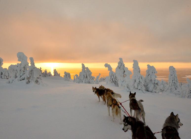 © Traîneau à chiens dans la forêt boréale