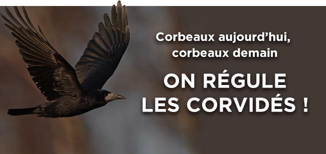Corbeaux aujourd'hui, corbeaux demain