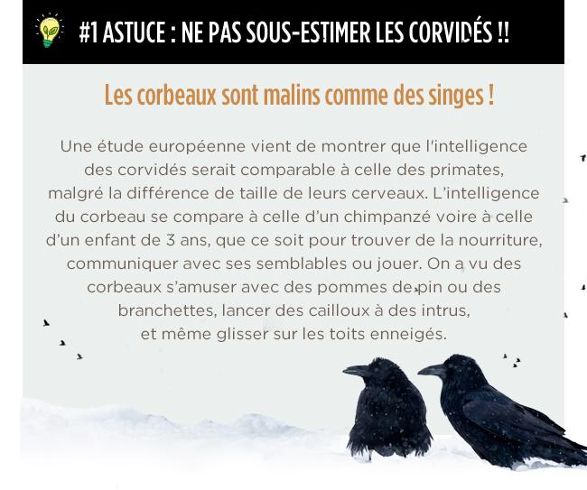 #1 ASTUCE : NE PAS SOUS-ESTIMER LES CORVIDÉS !!